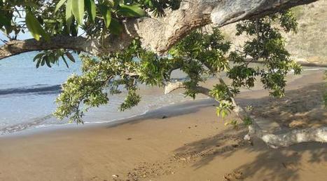 Sur les traces de Darwin aux Galápagos | Biodiversité & Relations Homme - Nature - Environnement : Un Scoop.it du Muséum de Toulouse | Scoop.it