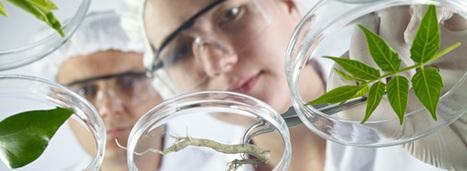 Chimie du végétal : des métiers stratégiques en mutation - Actu-Environnement.com | Industrie | Scoop.it