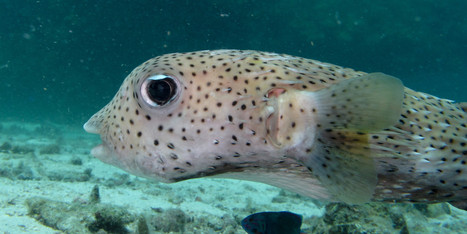 Fish Just May Be A Lot Smarter Than We Thought | All about water, the oceans, environmental issues | Scoop.it