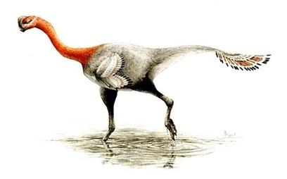 Corrigido lapso de classificação de dinossauro 'emplumado' | Milhares de milhões de anos... a mesma Terra ! | Scoop.it