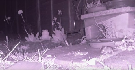 Spy on Garden Critters with Raspberry Pi-Powered Night Vision | Make: | Raspberry Pi | Scoop.it
