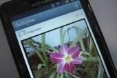 Instagram s'octroie le droit de vendre les photos des utilisateurs | Articles Réseaux Sociaux | Scoop.it