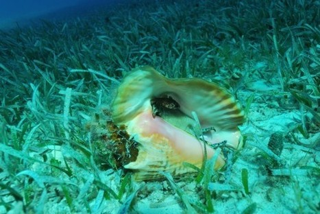 Analyzing Seagrass Beds in the Bahamas: Diving into Field Research with Shedd Aquarium | Amocean OceanScoops | Scoop.it