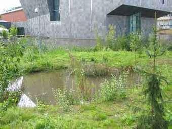 Stichting Stadsnatuur Eindhoven | Stad@Natuur | Scoop.it