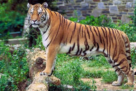 Enjoy the Versatility of Forest at Mahananda Wildlife Sanctuary | Dooars Ecoviillege | Scoop.it