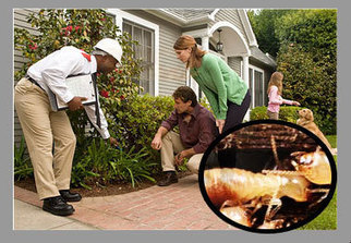 Commercial, Residential Pest Control Derlhi/NCR | Noida | Gurgaon | Pest Control Services In Noida NCR | Scoop.it