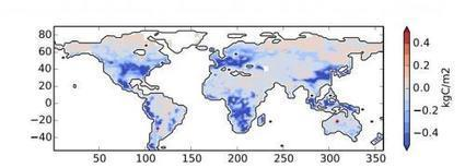 Soil's large carbon stores could be freed by increased CO2, plant growth | Zero Footprint | Scoop.it