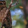 Conservation & Wildlife
