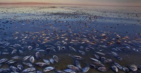 Si rien n'est fait, les océans n'auront bientôt plus l'oxygène nécessaire à la survie du monde marin | Home | Scoop.it