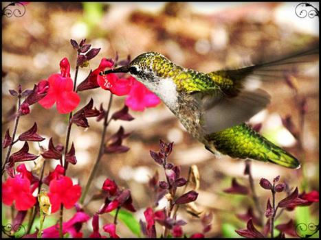 A Garden For Non-gardener | Garden and Outdoor Australia 2 | Scoop.it