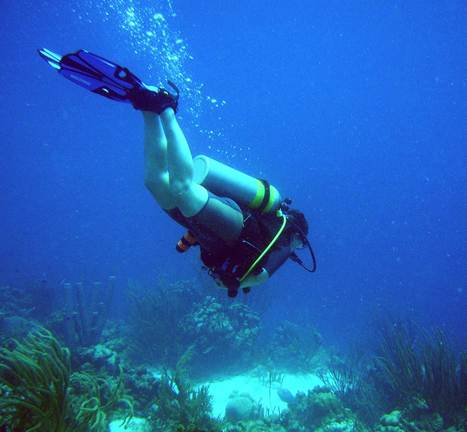 Three things divers should never do:::: | All about water, the oceans, environmental issues | Scoop.it