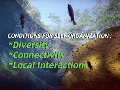 An Introduction to Self-Organization « Interaction Institute for Social Change Blog   Artisan   Scoop.it