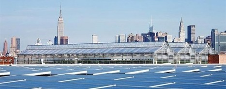 Gotham Greens: Sustainable Farming in the Big Apple | Organic Connections | Local Economy in Action | Scoop.it