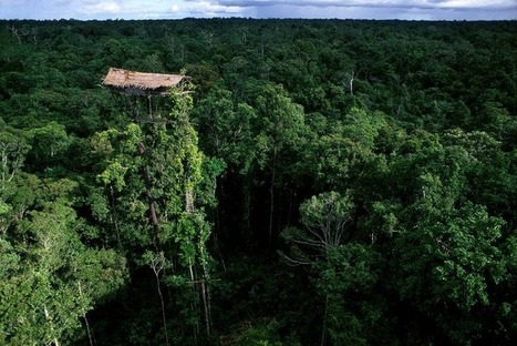 The Tree Houses of the Korowai Tribe of New Guinea | Amusing Planet | Papuan News | Scoop.it