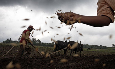 Vandana Shiva: 'Seeds must be in the hands of farmers' | YOUR FOOD, YOUR HEALTH: Latest on BiotechFood, GMOs, Pesticides, Chemicals, CAFOs, Industrial Food | Scoop.it
