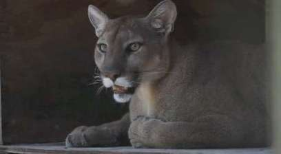 Wild animal cages opened at Everglades Wonder Gardens - USA Today - USA TODAY   Animals1   Scoop.it