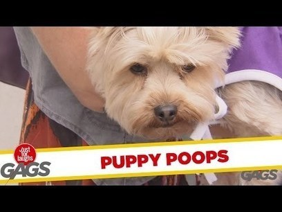 Puppy Poops in a Mailbox   internet marketing   Scoop.it