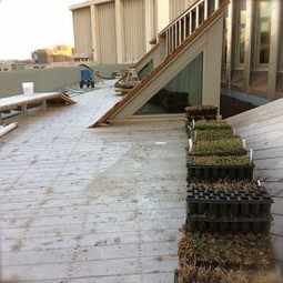 Project Breakdown: SUNY ESF | Recover Green Roofs | Vertical Farm - Food Factory | Scoop.it