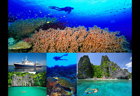 Underwater adventures with Discovery Fleet dive cruises | Good Places | Scoop.it