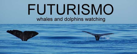AZORES WHALE WATCHING-FUTURISMO: May 11th to 13th - our whale and dolphin sightings | Eco Friendly Vacations | Scoop.it