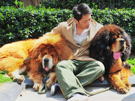 Is this the world's most expensive dog? Pair of very big, very slobbery ... - National Post | Breeding and Genetics | Scoop.it
