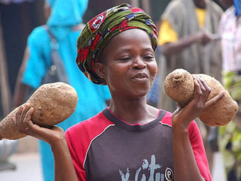 Agfax interview: Simple technique to tackle yam diseases - download or listen to audio | The Agrobiodiversity Grapevine | Scoop.it