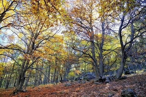 El altruismo entre arboles permite el desarrollo del bosque | Actualidad forestal cerca de ti | Scoop.it