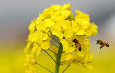 """Lire notre dossier d'actu """"Les abeilles en déclin""""   Développement durable dans le bâtiment   Scoop.it"""