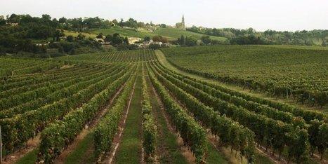 Viticulture : deux syndicats s'opposent à l'accord interprofessionnel des Vins de Bordeaux   Oenotourisme en Entre-deux-Mers   Scoop.it