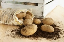 Potatoes: Endless Varieties in Switzerland, by Jonell Galloway | The Rambling Epicure | Scoop.it