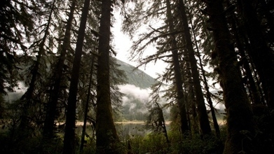 The Great Bear Rainforest | Silviculture and Forest News | Scoop.it