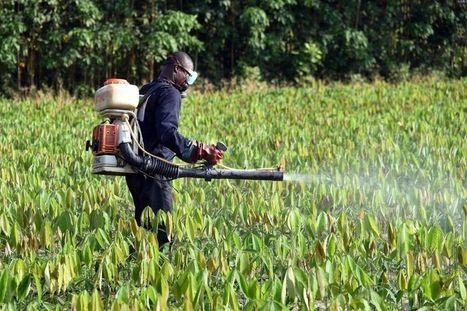 Pesticides : le chiffre bidon de Cash Investigation - Libération | Actualités écologie | Scoop.it