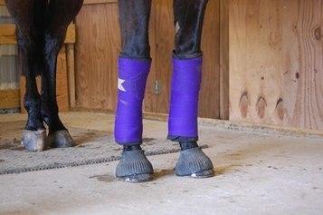 Researchers Investigate Leg Bandage Pressure   Racing Business   Scoop.it