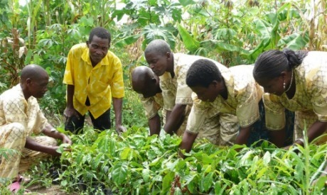Feeding a hungry world with trees - AlertNet | AnnBot | Scoop.it