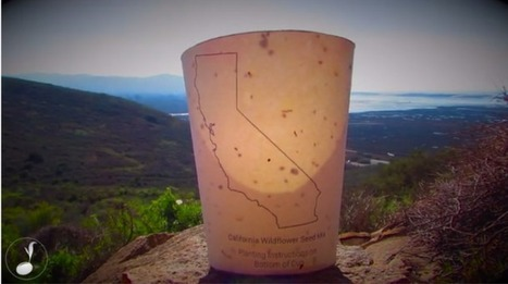 California Entrepreneur Invents Coffee Cups that Can Revive Forests | Coffee News | Scoop.it