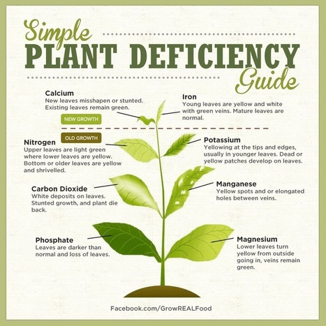 Identifying Plant Nutrient Deficiencies | Permaculture - [creatively] re-design our communities, environment and our behavior | Scoop.it