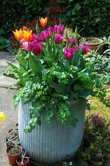 Tuckshop Gardener: Any old iron (or tin)? | Grown Green Gardens | Scoop.it
