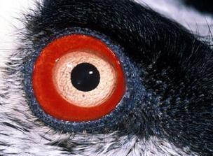 Un curso para saber manejar a animales en peligro de extinción - leonoticias.com   Animales en peligro   Scoop.it