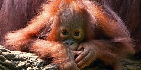 12 Rare Animals That are Teetering on the Brink of Extinction | Farming, Forests, Water, Fishing and Environment | Scoop.it