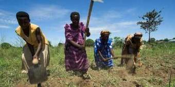 The Fight for Women's Land Rights in Uganda | land rights | Scoop.it