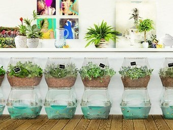 Aqualibrium Garden: modular aquaponics for growing food in apartments (Video) - Treehugger | Better Home and Garden | Scoop.it