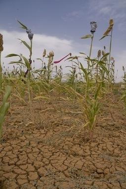 Boeren in Sahel planten steeds meer bomen op hun land   Permacultuur in Nederland   Scoop.it