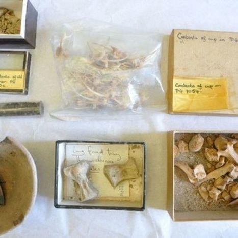 Forgotten food offerings found in uni clean-up | ABC (Australie) | Kiosque du monde : Asie | Scoop.it