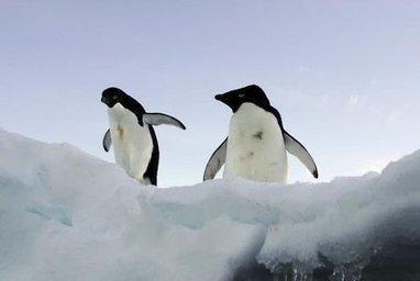 Novel avian flu virus discovered in penguins in Antarctica | IDM News | Scoop.it