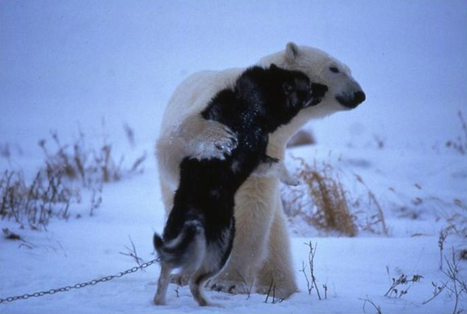 Polar Bear: I come in Peace | Authors, Books, and So Much More! | Scoop.it