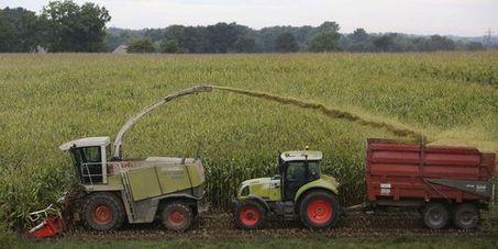 Une commission du Parlement européen contre un maïs OGM   Environnement   Scoop.it