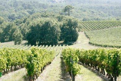 Une structure commune pour restructurer les vignobles | Agriculture en Dordogne | Scoop.it