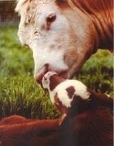 http://www.veganisme.fr | Alimentation | Scoop.it