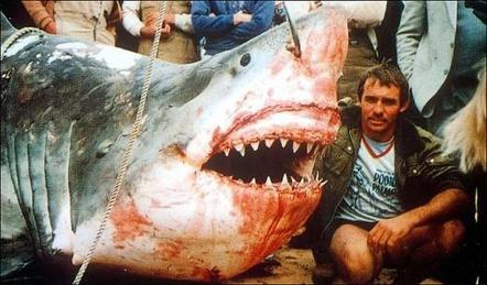 Brutal Australian Shark Cull Impoverishes Ocean - Government Sanctioned Ecocide | OUR OCEANS NEED US | Scoop.it