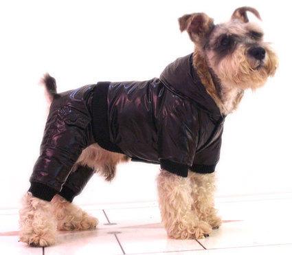 Trendy Water-proof & Cold-proof Four-legged Dog Coat – PetSuperDeal.com | petsuperdeal | Scoop.it
